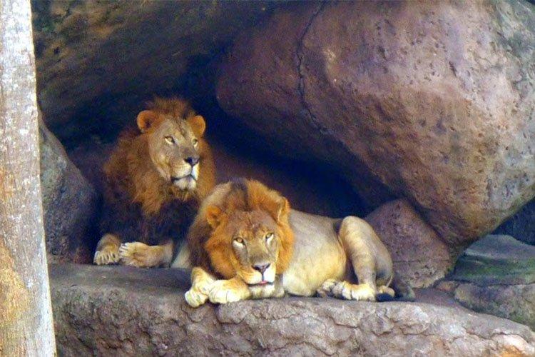 Tsavo Lion Restaurant, Mara River Safari Lodge