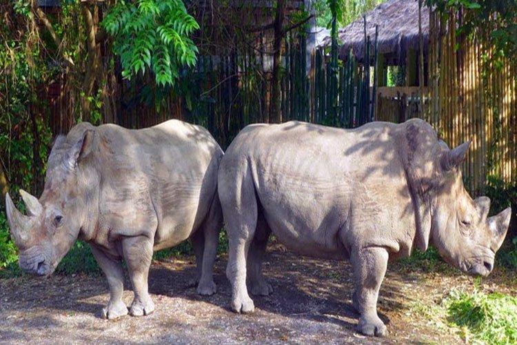 Mara River Safari Lodge, Bali Safari and Marine Park