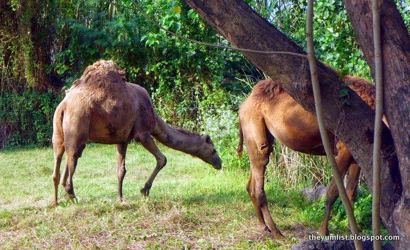 Maya River Safari Lodge, Bali Safari and Marine Park
