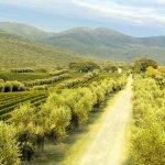 Tuscan wines