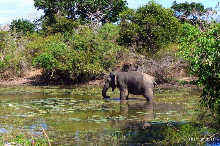 Yala National Park, Safari with Uga Escapes
