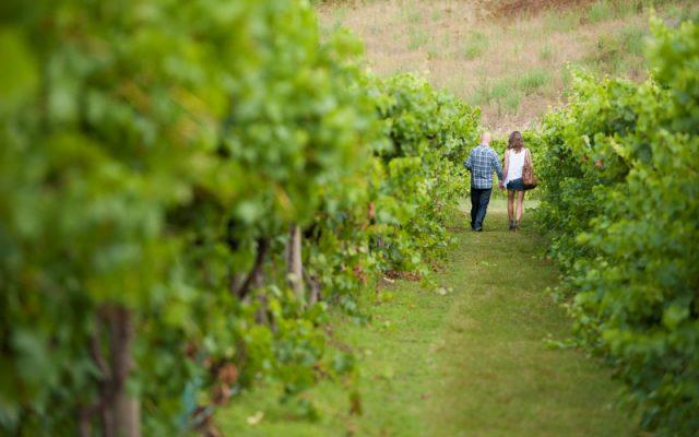Lerida Estate, Winery