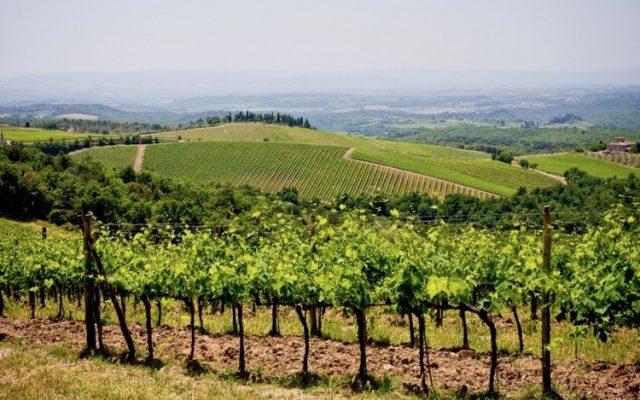 Uggiano Wines Tuscany