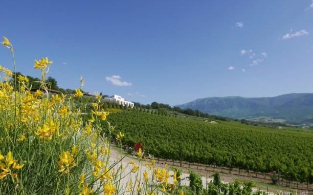 Cantina Zaccagnini, Abruzzo