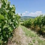 Aziendo Uggiano Tuscan Wines