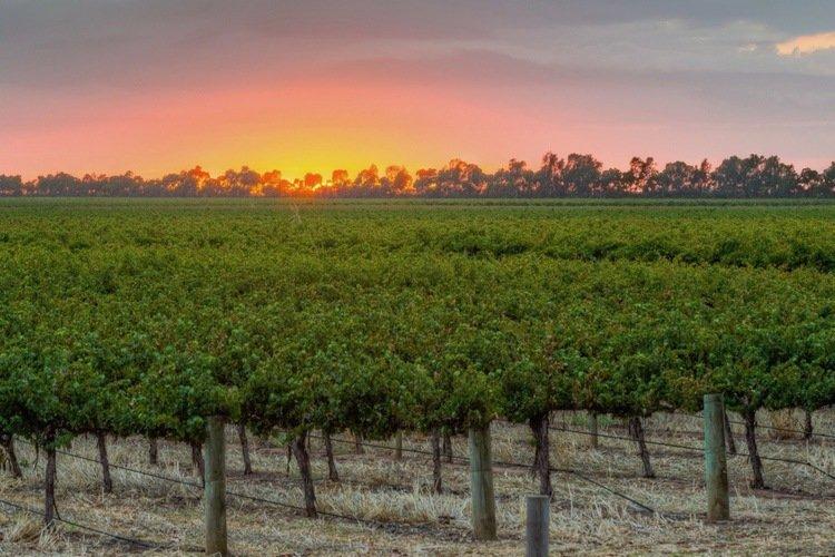 Sunrise Heartland Wines
