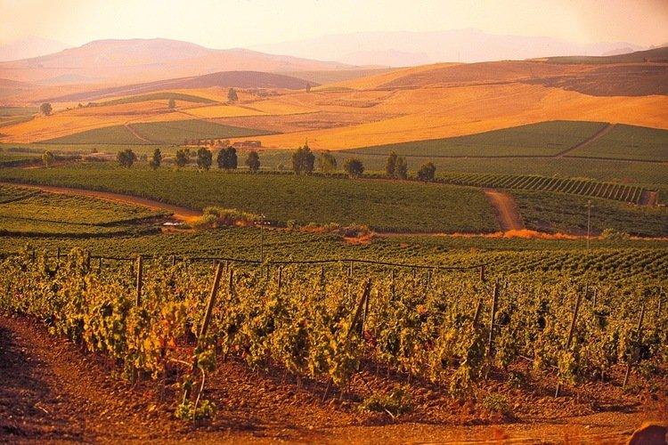 Ethica Wines Italy