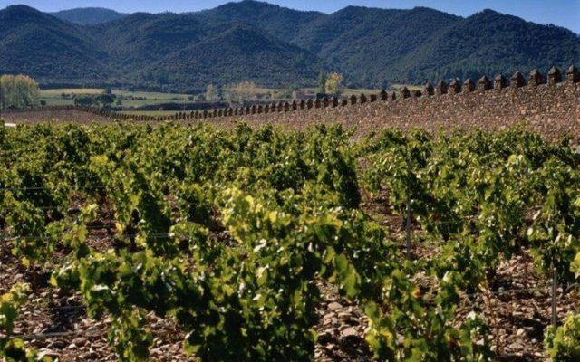 Torres Wine Estate
